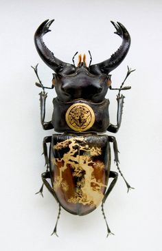 Oil on Beetle by Akihiro Higuchi Beetle Insect, Insect Art, Cool Insects, Bugs And Insects, Inspiration Artistique, Cool Bugs, Bug Art, Insect Jewelry, Beautiful Bugs