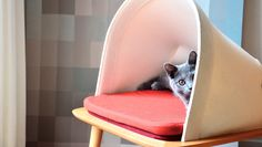 Classy furniture for discerning cat. Mobilier chic pour chat exigeant.