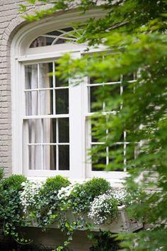 Window box: trailing ivy, spheres of boxwood, white impatiens and lobelia