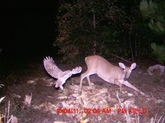 Awesome Trail Cam   trail cam tuesday - the awesome outdoors (22 pics)