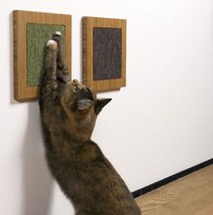 itch wall cat scratcher