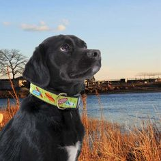Cute Dog Collars for all seasons www.lalapatoot.com