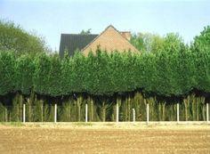 Herman van den Boom: Lovenjoel