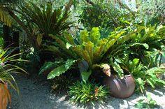 lovely tropical garden with birds nest fern