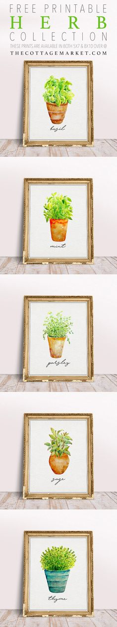 Free Printable Herb Collection Get this 5 Piece Herb Wall Art They are free and they will add that perfect touch of freshness into your Kitchen! Home Crafts, Arts And Crafts, Diy Crafts, Paper Crafts, Herb Wall, Kitchen Wall Art, Kitchen Decor, Diy Kitchen, Kitchen Ideas