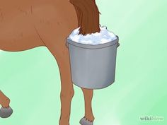 How to Bathe a Horse. If you're going to a show, or your horse is covered in mud, you'll need to give the animal a bath. Bear in mind that a horse can become chilled in cold weather, so it might be best to postpone until a sunny. Horse Care, Horses, Bath, Learning, Bathing, Horse Grooming, Studying, Teaching, Bathroom