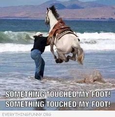 funny captions horse jumping in ocean something touched my foot