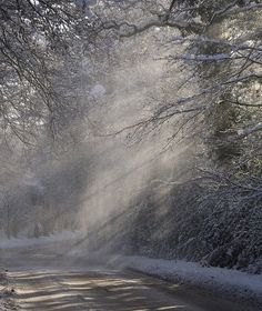 sun beams through the frosted trees Nature Water, Nature Tree, Winter Day, Winter Snow, Winter Light, Winter Schnee, Snow And Ice, Winter Beauty, Mother Nature