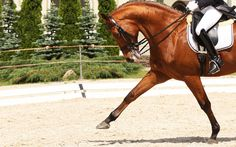 Great article on Leg Strengthening Exercises for Riders, to read more visit Noble Life Magazine