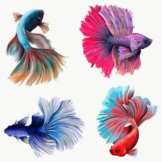 Beautiful betta fish collection design element  | premium image by rawpixel.com / Te Betta Fish Tattoo, Aggressive Animals, Fish Vector, Fish Drawings, Pet Fish, Butterfly Watercolor, Beautiful Fish, Fish Art, Tropical Fish