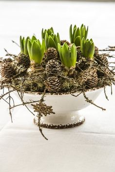 Floradania Marketing: Vinterlig hygge med løgblomster Floradania Marketing: Winter fun with onion flowers Christmas Flowers, White Christmas, Christmas Holidays, Christmas Crafts, Christmas Decorations, Holiday Decor, Xmas, Country Christmas, Spring Decoration