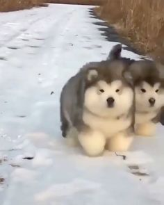 """13.7k Likes, 890 Comments - Animals Of Instagram (@animals_of_lnstagram) on Instagram: """"Fluffiest duo you will ever see... From Imgur/boopmonger ❤️"""""""