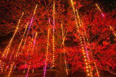 Don't miss the brand new interactive, outdoor exhibit, Illumination: Tree Lights, @Megan Horton Arboretum this holiday season!