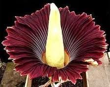 flores raras e exoticas - Pesquisa Google