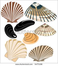 Find Vector Illustrations Mussels Clams stock images in HD and millions of other royalty-free stock photos, illustrations and vectors in the Shutterstock collection. Thousands of new, high-quality pictures added every day. Line Illustration, Stained Glass Patterns, Mussels, Clams, Vector Illustrations, Royalty Free Stock Photos, Pictures, Resume Templates, Image
