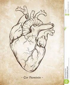 Billedresultat for da vinci heart