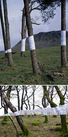 """Tree, Line installations by Zander Olsen.    """"This is an ongoing series of constructed photographs rooted in the forest. These works, carried out in Surrey, Hampshire and Wales, involve site specific interventions in the landscape, 'wrapping' trees with white material to construct a visual relationship between tree, not-tree and the line of horizon according to the camera's viewpoint."""""""