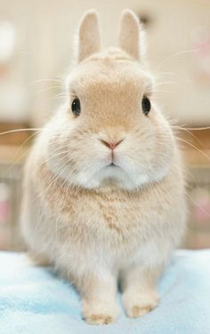Cutest animals My Garden Cute Little Animals, Cute Funny Animals, Cute Dogs, Cutest Animals, Cute Baby Bunnies, Cute Babies, Fluffy Animals, Animals And Pets, Cute Bunny Pictures