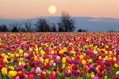 Ritual para celebrar la Luna de las Flores