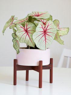 Houseplant Inspiration: Desert Modern Home Flora Grubb Gardens Case Study Planter in Pink Houseplant. Balcony Plants, Indoor Plants, Indoor Gardening, Cactus, Plantas Indoor, Flora Grubb, Pink Plant, Green Plants, Hanging Planters