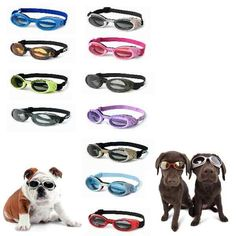 Doggles... fur real.  Dexter needs these for riding in the Jeep with the top off next summer!!