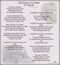 For all my beloved furbabies who are at the Rainbow Bridge waiting for me. Animal Quotes, Dog Quotes, Dog Sayings, Qoutes, I Love Dogs, Puppy Love, Pet Poems, Pet Loss Grief, Boston Terrier
