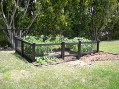 Enchanting Garden Fence Ideas for Vegetable Garden: Cool Vegetable Garden Fence Ideas Grow Space With Trees And Grass ~ workdon.com Gardens Inspiration