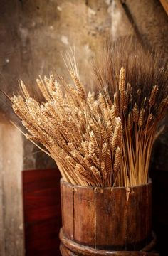wheat and barley in wooden bucket - Country Living Fields Of Gold, Wheat Fields, Harvest Time, Harvest Season, Autumn Harvest, Farm Life, Country Life, Country Living, Belle Photo