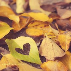 for the love of autumn by nhuthanh.deviantart.com on @deviantART