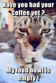 Have you had your coffee yet ? My food bowl is empty ! http://cheezburger.com/9034826240/coffee-cat-meme