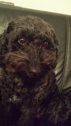 #dog #snoopy #cute
