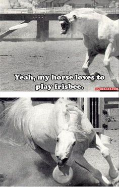 funny animals - Horses Funny - Funny Horse Meme - - funny animals The post funny animals appeared first on Gag Dad. Funny Horses, Cute Horses, Pretty Horses, Horse Love, Beautiful Horses, Animals Beautiful, Animals And Pets, Funny Animals, Cute Animals