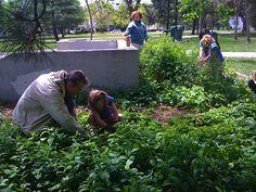 Friend of Horton Park volunteers work to keep the gardens beautiful.