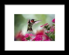 Ruby Garden Jewel Framed Print By Christina Rollo