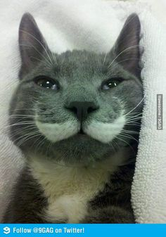 Cat with Mustache =)