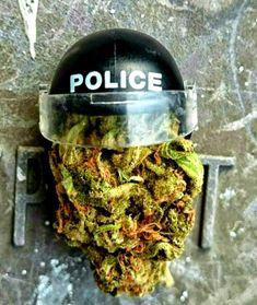 Marijuana Funny, Cannabis, Weed Art, Smoke Weed, Dabbing, Weeding, Joker, Trees, Projects