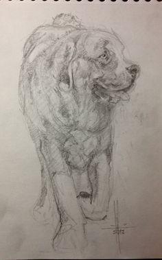 Dibujo perro Mastín por Francisco Javier Abellán