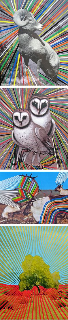 Joe Ryckebosch. Teaching children artist: precut animals from magazine or web, add colorful lines