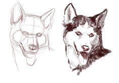 dog anatomy drawing - Pesquisa Google