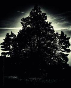 'Midnight Sentinel' von mimulux bei artflakes.com als Poster oder Kunstdruck $16.63