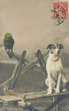 Vintage dog photo postcard, terrier and parrot, hand-colored? pc hond papegaai 1908