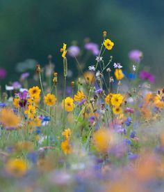 Participate in the Bokeh Plants and Flowers Photo Contest for a chance to win prizes and give exposure to your photography. Join over 300 photo contests per year and browse a huge selection of photos. Wild Flower Meadow, Meadow Flowers, Wild Flowers, Beautiful Flowers, Spring Flowers, Natur Wallpaper, The Colour Of Spring, Spring Photos, Flower Wallpaper