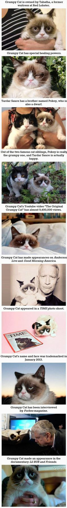 Grumpy cats story. He has a brother.