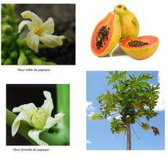 Quand vous mangez un fruit tropical, gardez les noyaux et les graines ! Vous pourrez faire pousser assez facilement de jolies plantes d'intérieur : dattier, citronnier, litchis, mais aussi des plantes plus exotiques : fruits du dragon, papayer ou manguier !