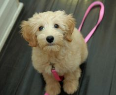 i don't think anyone understands how badly i need a dog.