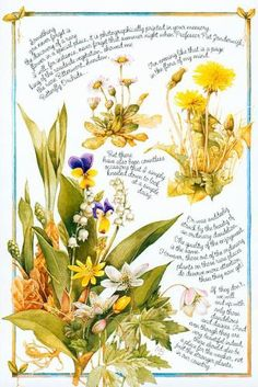 Nature - Katie Barwell - Picasa Web Albums Botanical Illustration, Botanical Prints, Marjolein Bastin, Nature Sketch, Nature Artists, Nature Journal, Dutch Artists, Nature Paintings, Illustrations