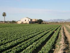 Camps cultivats a Balsars al costat Vallverda, Campdelx