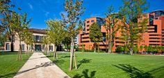 Giovani alberi crescono. Verde e architettura. Quartiere Campari, Sesto San Giovanni, MI