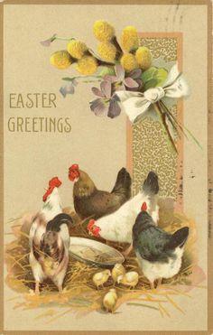 Chicken Easter Greetings