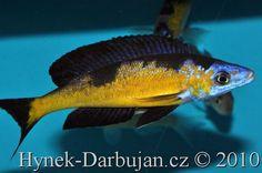 Sharing DIY (or not) aquarium stuff Tropical Aquarium, Tropical Fish, Planted Aquarium, Aquarium Fish, Lac Tanganyika, Monster Fishing, Fish Breeding, Koi Carp, African Cichlids